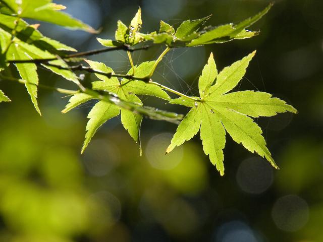 early-autumn.jpg
